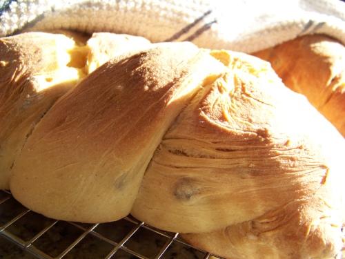nissua-freshly baked